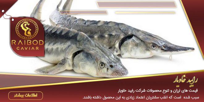 قیمت گوشت ماهی اوزون برون