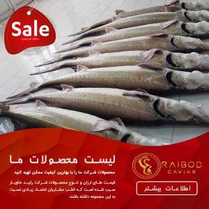 معروف ترین ماهی های دریای خزر